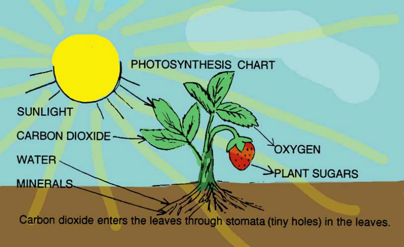 ALEX Lesson Plan: Fascinating Photosynthesis